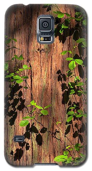 Galaxy S5 Case featuring the photograph Poison-oak On Incense Cedar by Alexander Kunz