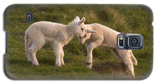 Sheep Galaxy S5 Case - Poke by Angel Ciesniarska