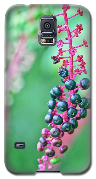 Poke Berries Galaxy S5 Case
