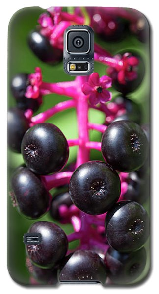 Pokeweed Cluster Galaxy S5 Case