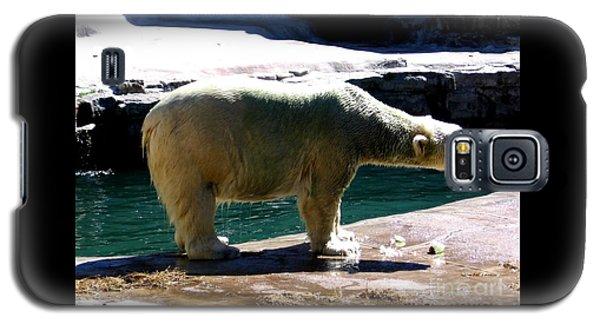 Polar Bear 3 Galaxy S5 Case