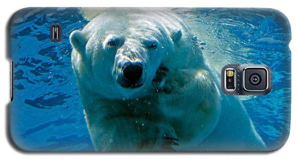Polar Bear Contemplating Dinner Galaxy S5 Case by John Haldane