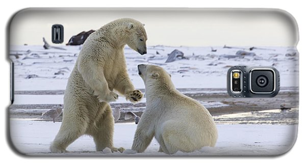 Polar Bear Play-fighting Galaxy S5 Case