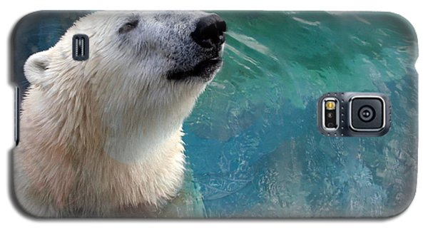 Polar Bear Up Close Galaxy S5 Case by Laurel Talabere