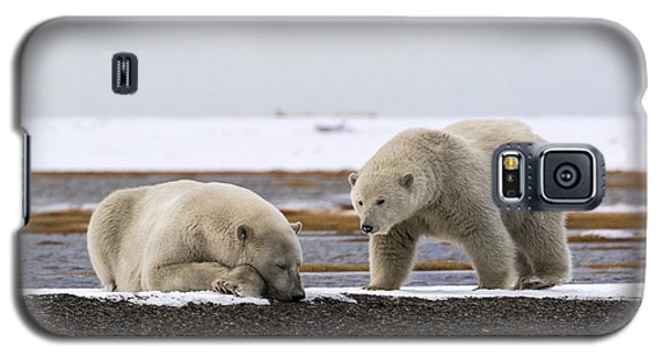 Polar Bear Zzzzzzz's Galaxy S5 Case