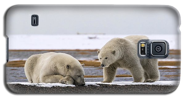 Polar Bear Zzzzzzz's Galaxy S5 Case