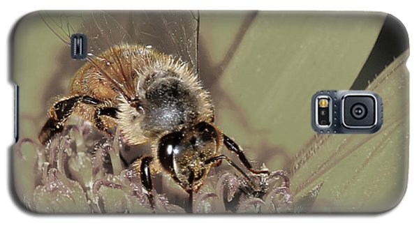 Pollinating Bee Galaxy S5 Case