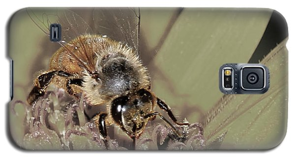 Pollinating Bee Galaxy S5 Case