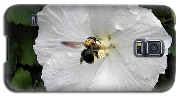 Pollination  Galaxy S5 Case
