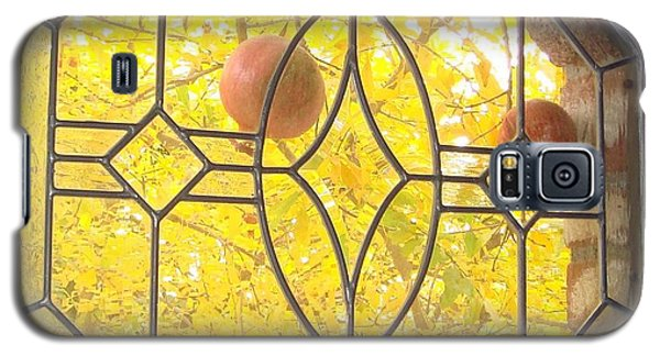 Pomegranate Peek A Boo Galaxy S5 Case by Laurie Morgan