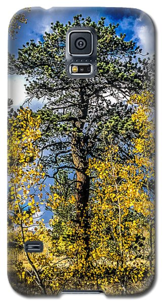 Ponderosa  Tree In The Aspens Of Fall Colorado Galaxy S5 Case