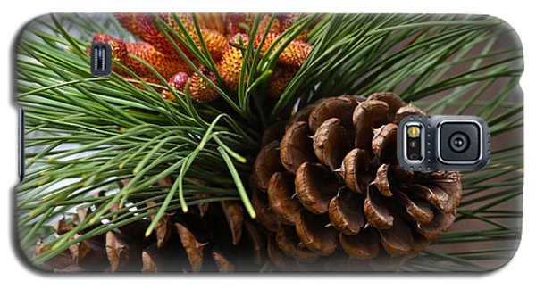 Ponderosa Pine Cones Galaxy S5 Case