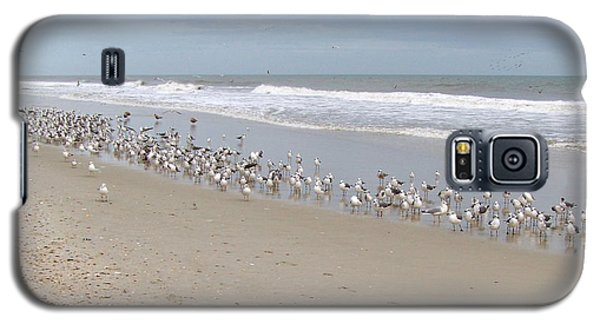 Ponte Vedra Birds Galaxy S5 Case by Carol  Bradley