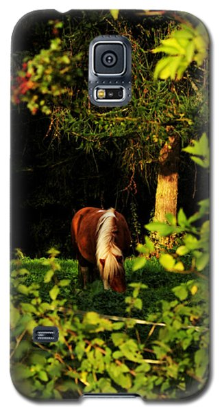 Pony In Sun-dappled Meadow Galaxy S5 Case