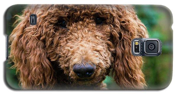 Poodle Pup Galaxy S5 Case