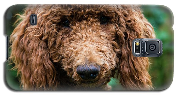 Poodle Pup Galaxy S5 Case