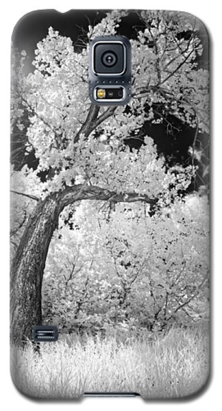 Poplars Under The Sun Galaxy S5 Case