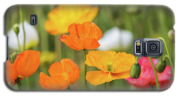 Galaxy S5 Case featuring the photograph  Poppies 1 by Werner Padarin