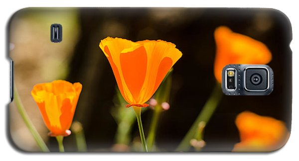 Poppies Along The Road Galaxy S5 Case