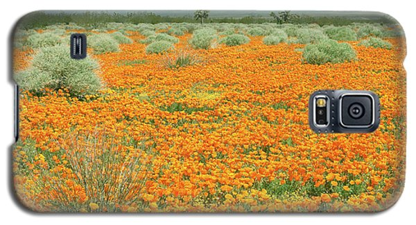 Galaxy S5 Case featuring the photograph Poppies For Ever - Poppy Fields Mohave Desert California by Ram Vasudev