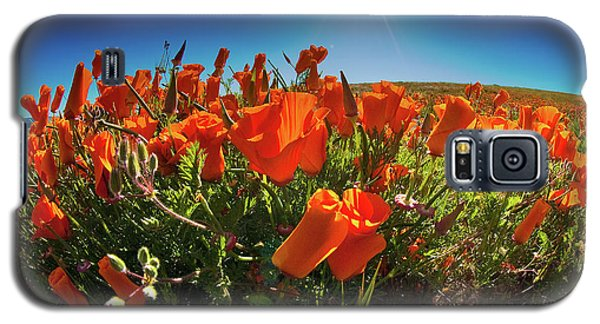 Galaxy S5 Case featuring the photograph Poppies by Harry Spitz