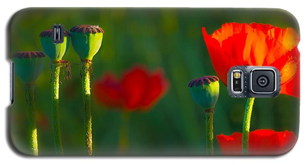 Poppies In Evening Light Galaxy S5 Case