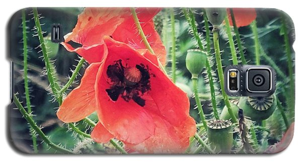 Galaxy S5 Case featuring the photograph Poppies by Karen Stahlros