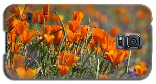 Poppies Galaxy S5 Case by Patrick Witz