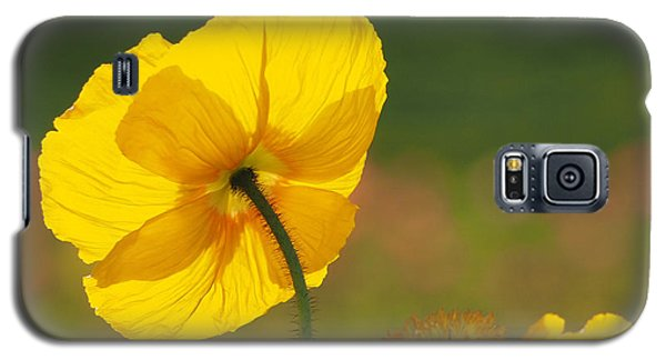 Poppies Seeking The Light Galaxy S5 Case