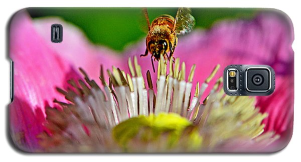 Poppy And A Bee 006 Galaxy S5 Case by George Bostian