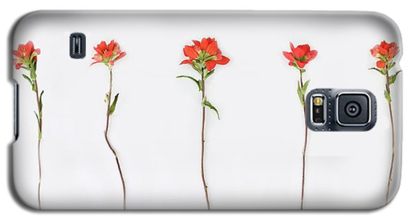 Poppy Blossoms Galaxy S5 Case by Brittany Bevis
