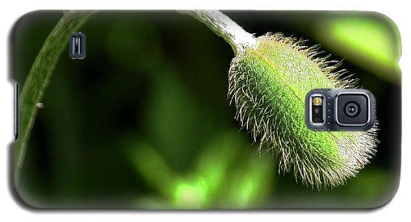 Poppy Bud In Sunlight Galaxy S5 Case