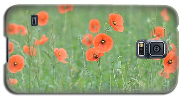 Poppy Field Galaxy S5 Case by Alan Lenk