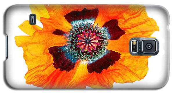 Poppy Pleasing Galaxy S5 Case