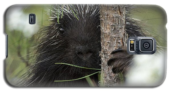 Porcupine Check-out Galaxy S5 Case