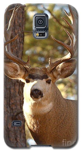 Portrait Of A 15-point Buck Galaxy S5 Case by Max Allen