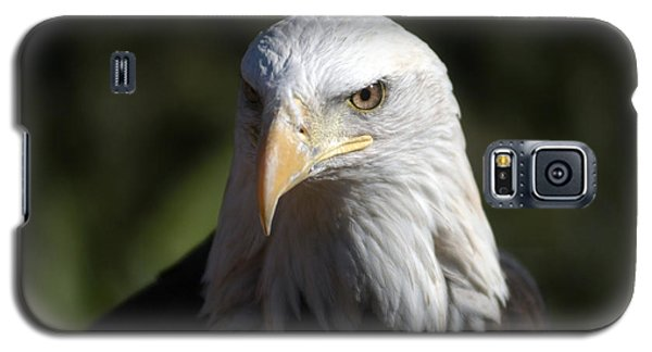 Portrait Of A Bald Eagle Galaxy S5 Case