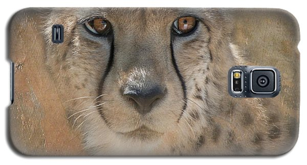 Portrait Of A Cheetah Galaxy S5 Case