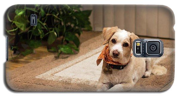 Portrait Of A Dog Galaxy S5 Case