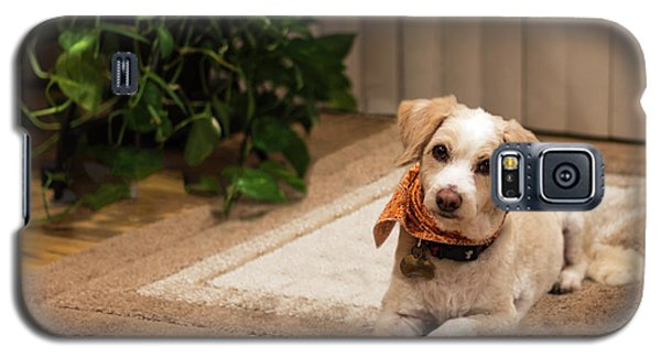 Portrait Of A Dog Galaxy S5 Case
