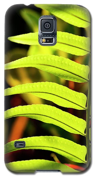 Portrait Of A Fern Galaxy S5 Case