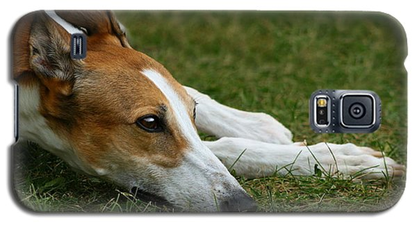 Galaxy S5 Case featuring the photograph Portrait Of A Greyhound - Soulful by Angela Rath
