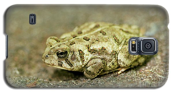Galaxy S5 Case featuring the photograph Portrait Of A Grumpy Toad - Fowler's Toad by Jane Eleanor Nicholas