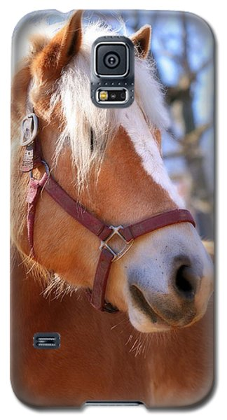 Galaxy S5 Case featuring the photograph Portrait Of A Haflinger - Niko by Angela Rath