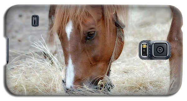Portrait Of A Horse Galaxy S5 Case by Brenda Bostic
