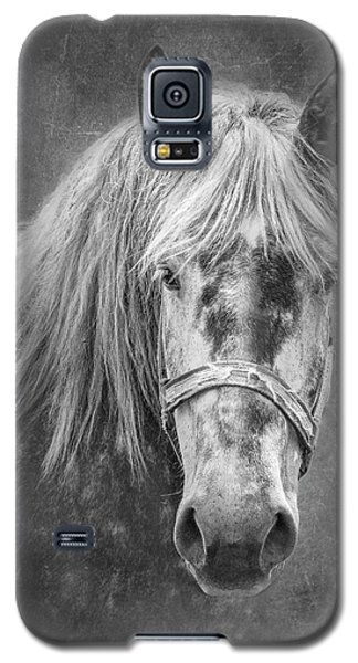 Galaxy S5 Case featuring the photograph Portrait Of A Horse by Tom Mc Nemar