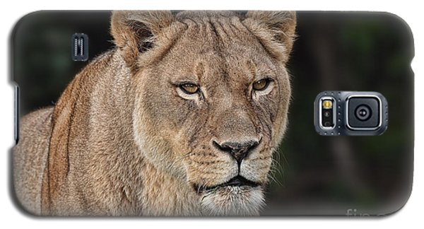Portrait Of A Lioness II Galaxy S5 Case by Jim Fitzpatrick