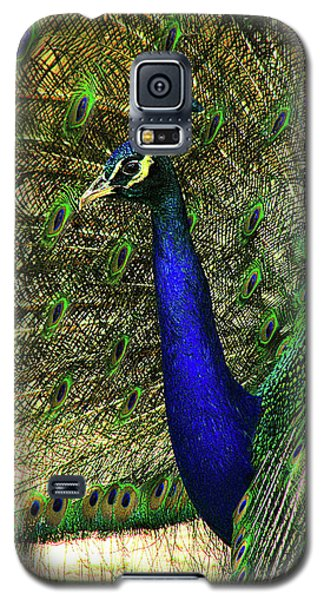 Galaxy S5 Case featuring the photograph Portrait Of A Peacock by Jessica Brawley