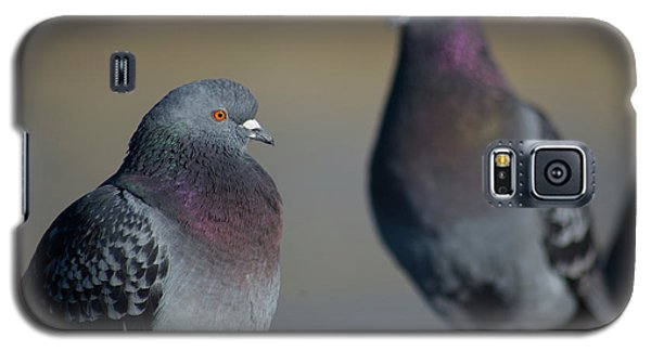 Galaxy S5 Case featuring the photograph Portrait Of A Pigeon by Lora Lee Chapman