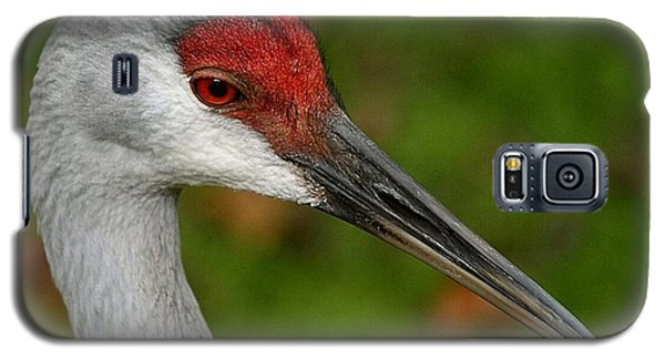Portrait Of A Sandhill Crane Galaxy S5 Case